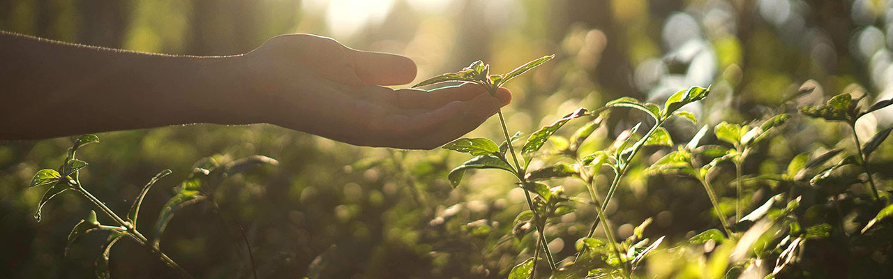 A hand holding up a small plant